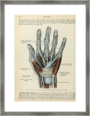 Anatomy Human Body Old Anatomical 83 Framed Print