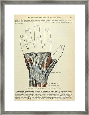 Anatomy Human Body Old Anatomical 84 Framed Print