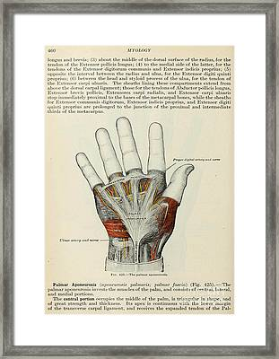 Anatomy Human Body Old Anatomical 85 Framed Print