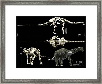 Anatomy Of A Titanosaur Framed Print by Rodolfo Nogueira