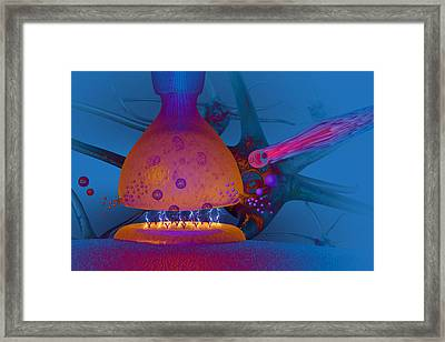 Anatomy Of Concussion Framed Print by Carol and Mike Werner