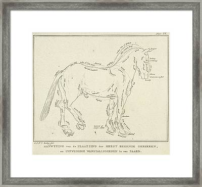Anatomy Of Horse With Possible Defects In Physique Framed Print by Artokoloro
