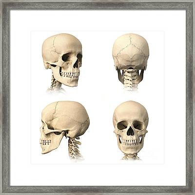 Anatomy Of Human Skull From Different Framed Print by Leonello Calvetti