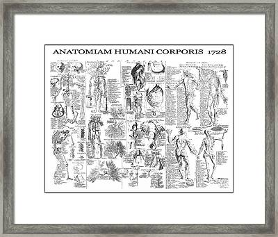Anatomy Of The Human Body  1728 Framed Print by Daniel Hagerman