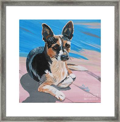 Ancho A Portrait Of A Cute Little Dog Framed Print by Phyllis Kaltenbach