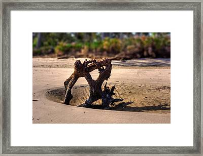 Anchor Driftwood On Jekyll Island Framed Print
