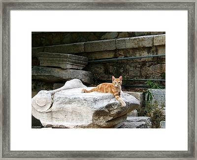 Ancient Agora Kitty Framed Print