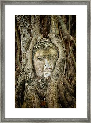 Ancient Buddha Entwined Within Tree Roots In Thailand Framed Print by Artur Bogacki