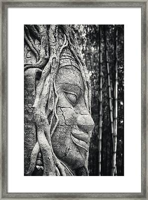 Ancient Buddha Stone Head Framed Print by Adam Romanowicz