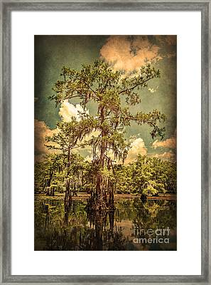 Ancient Cypress In Caddo Lake Framed Print