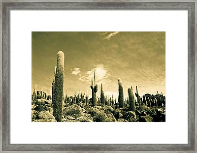 Framed Print featuring the photograph Ancient Giants by Lana Enderle