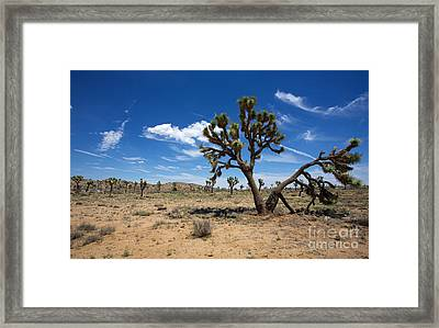 Ancient Joshua Tree Framed Print