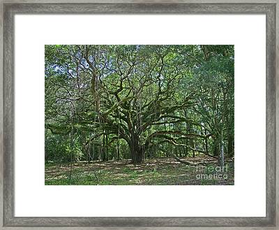 Ancient Oak Cathedral Of Moss And Fern Framed Print