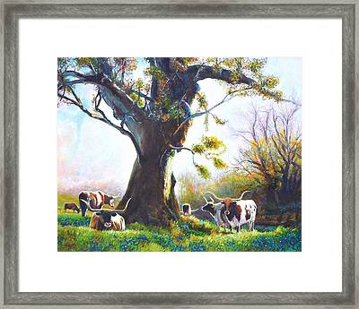 Ancient Oaks And Bluebonnets And Longhorns Framed Print by Charles Wallis