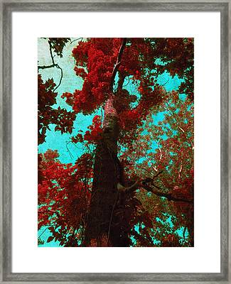 Ancient One Framed Print by Shawna Rowe