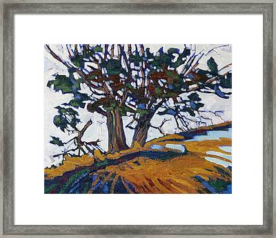 Ancient Red Cedars Framed Print by Phil Chadwick