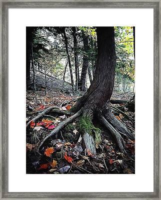 Ancient Root Framed Print by Natasha Marco