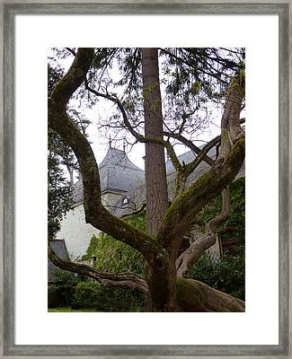 Ancient Tree At Chateau De Chenonceau Framed Print by Susan Alvaro