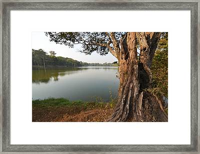 Ancient Tree Cambodia Framed Print by Bill Mock