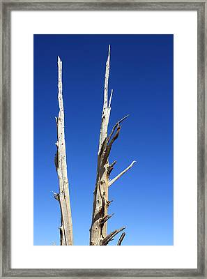 Ancient Wood Framed Print