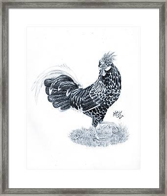 Ancona Chicken Framed Print by Ashe Skyler