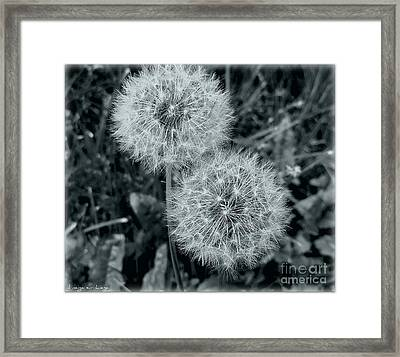...and I Huff... And I Puff... Framed Print by Mariana Costa Weldon