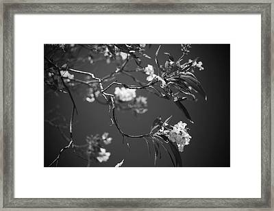 And Spring Became The Summer Framed Print by Laurie Search