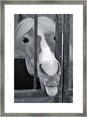 Framed Print featuring the photograph And That's What I Think Of That by Barbara Dudley