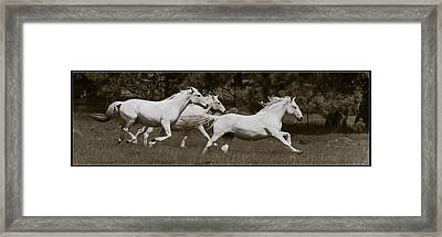 And The Race Is On Framed Print by Wes and Dotty Weber