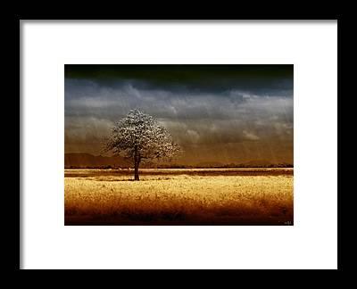 Drought Framed Prints