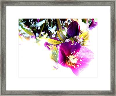 And The Snow Falls Framed Print by Sharon Costa