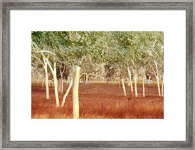 Framed Print featuring the photograph And The Trees Danced by Holly Kempe