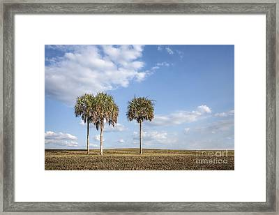 And Then There Were Three... Framed Print