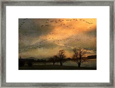 And They Flew Away Framed Print by Kathy Jennings