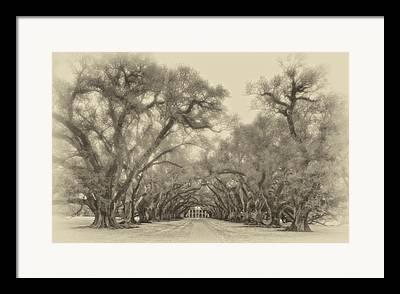 Oak Alley Plantation Digital Art Framed Prints