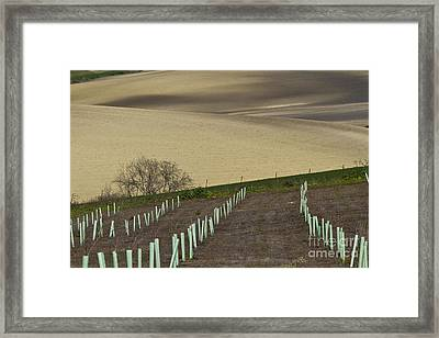 Andalusian Farmland Series-4 Framed Print by Heiko Koehrer-Wagner