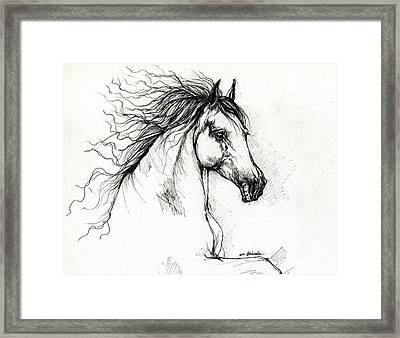 Andalusian Horse Drawing Framed Print