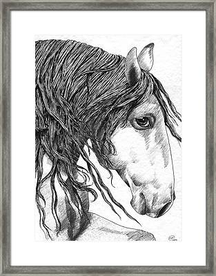 Andalusian Horse Framed Print by Kate Black