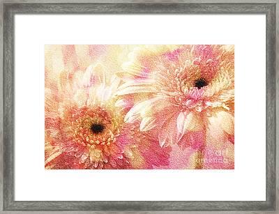 Andee Design Gerber Daisies 1 Framed Print