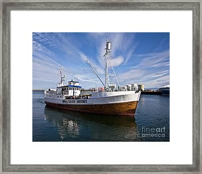 Andenes Safari Boat Framed Print by Heiko Koehrer-Wagner
