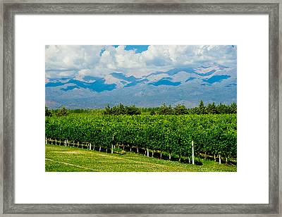 Andes Vineyard Framed Print