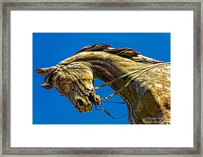 Andrew Jackson's Horse  Framed Print by Christopher Holmes