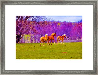 Andy's Horses Framed Print by BandC  Photography