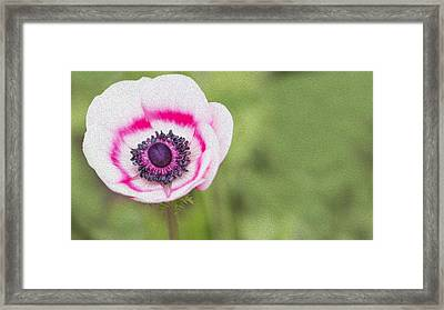 Anemone - Pink Center Framed Print by Rebecca Cozart