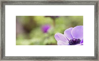 Anemone - Purple Center Framed Print by Rebecca Cozart