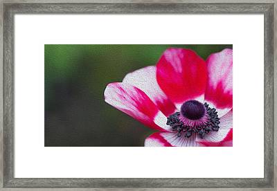 Anemone - Red Center Framed Print by Rebecca Cozart