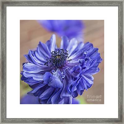 Anemone Blues II Framed Print