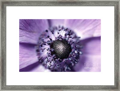 Anemone  Framed Print by Carl Perkins