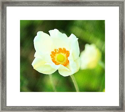 Anemone Framed Print by Cathie Tyler