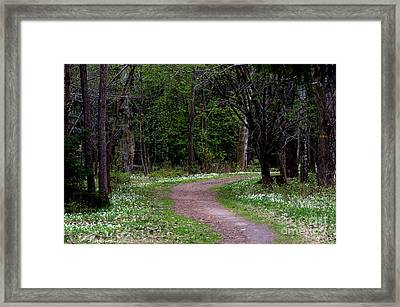 Anemone Path Framed Print by Torbjorn Swenelius